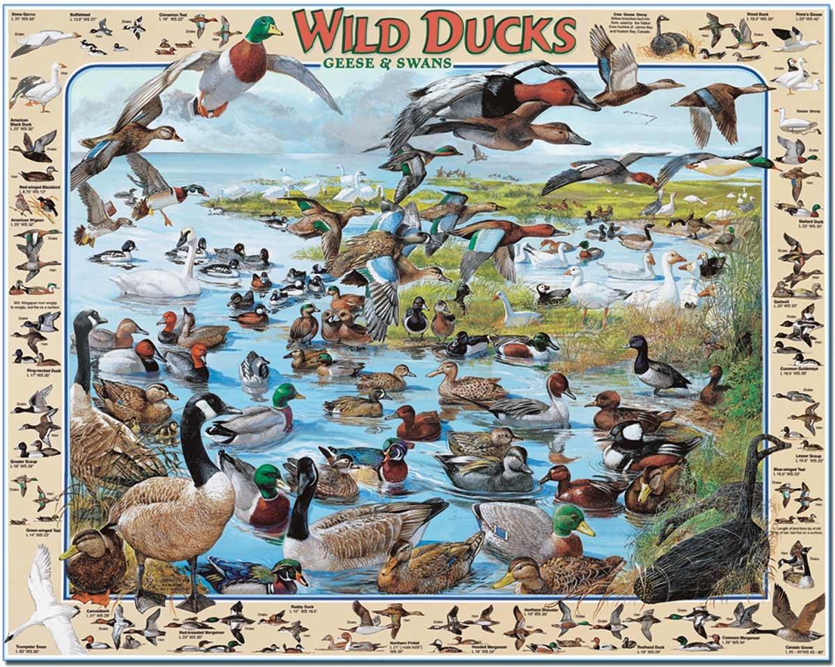 White Mountain Puzzles Wild Ducks
