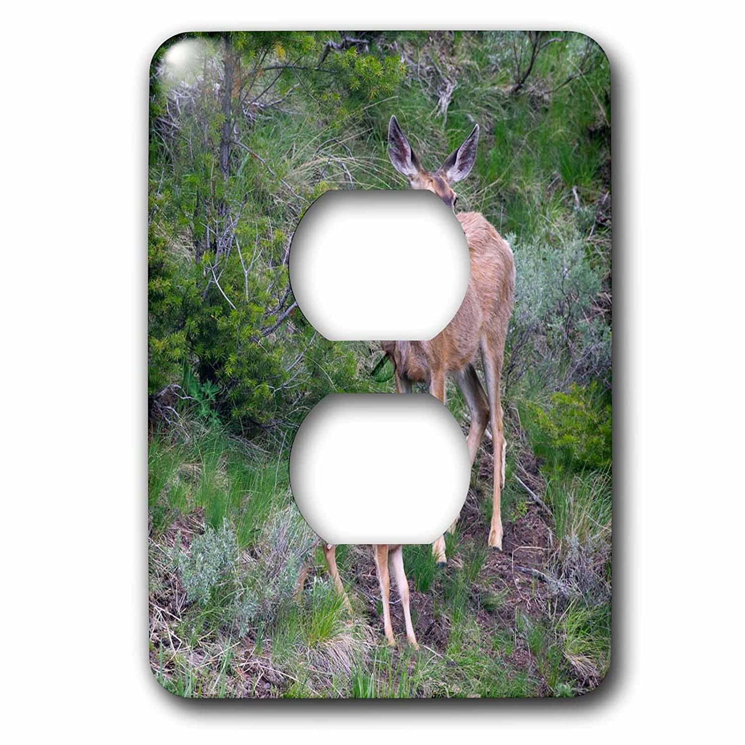 3dRose LSP/_231949/_6 Mule Deer Doe with Fawn Plug Outlet Cover
