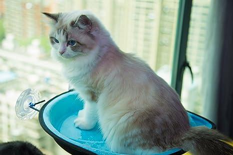 Amazon.com: Gato de percha de ropa ventana asiento ventana ...