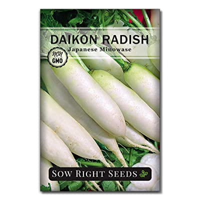Sow Right Seeds - Japanese Minowase Daikon Radish Seed for Planting - Non-GMO Heirloom Packet with Instructions to Plant a Home Vegetable Garden - Great Gardening Gift (1) : Garden & Outdoor