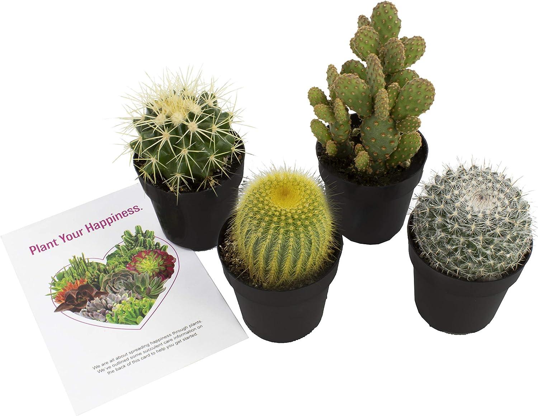 Amazon Com Altman Plants Assorted Live Cactus Collection Mini