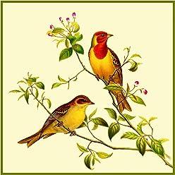 Naturalist John Gould Birds Golden Woodpecker Counted Cross Stitch Chart Pattern