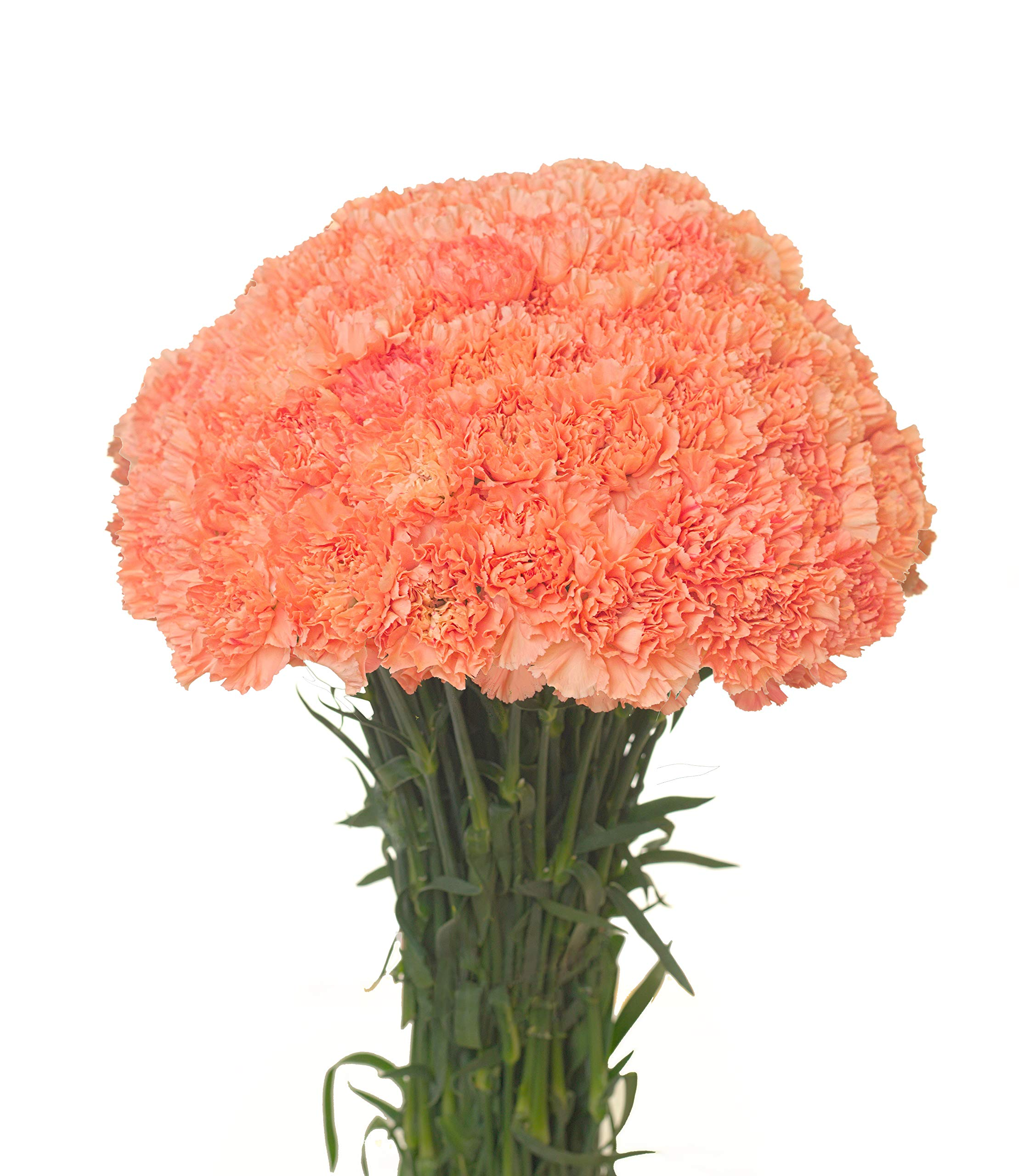Carnations Multiple Colors and Quantities (50, Orange)