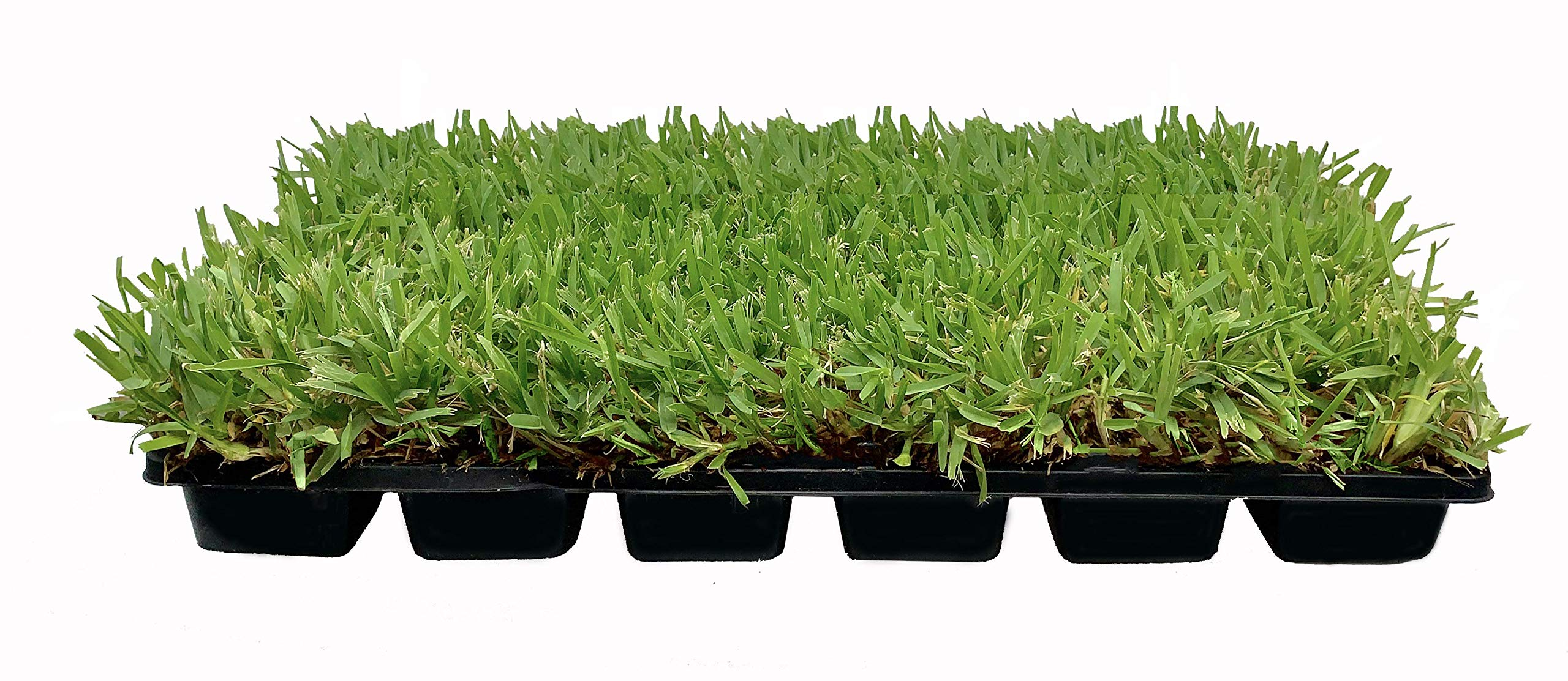 St. Augustine 'Palmetto' 3 Inch Sod Plugs - 18 Plugs - Drought, Salt, Shade, Cold, Heat & Frost Tolerant Turf Grass by Florida Foliage (Image #1)