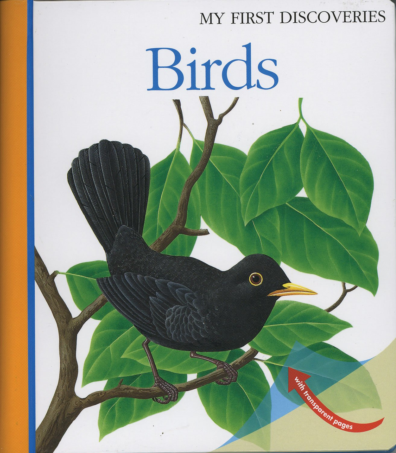 Birds (My First Discoveries) PDF