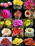 Flowering Cactus Mix !! Rare Garden Cacti Exotic Desert Succulent Seed 50 Seeds