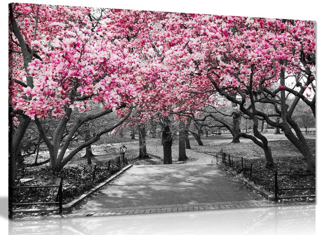 Black & White Wall Art Pink Blossoms Canvas Wall Art Picture Print (36x24in) Panther Print
