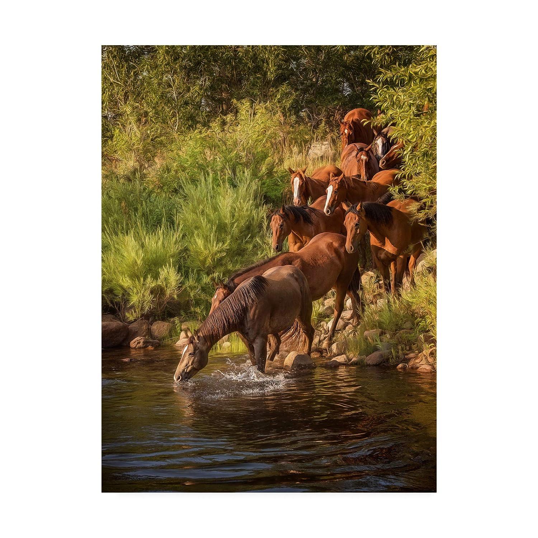 Trademark Fine Art River Horses I by Phburchett, 14x19