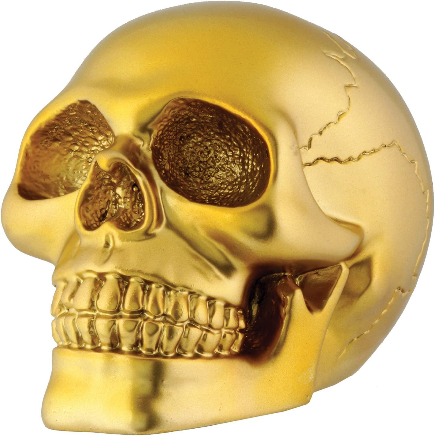 Gold Skull Head Collectible Skeleton Decoration Figurine Model
