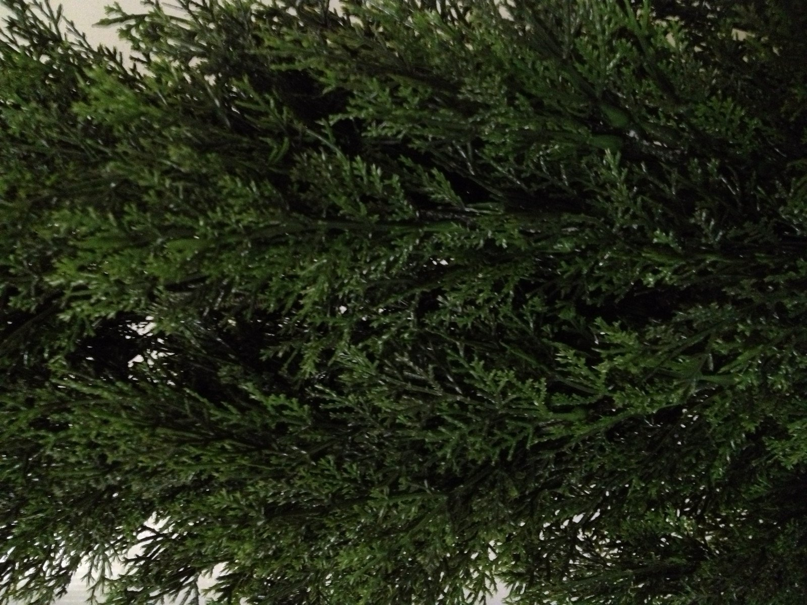 Two 4 Foot Artificial Topiary Cedar Trees Potted Indoor Outdoor Plants by Silk Tree Warehouse