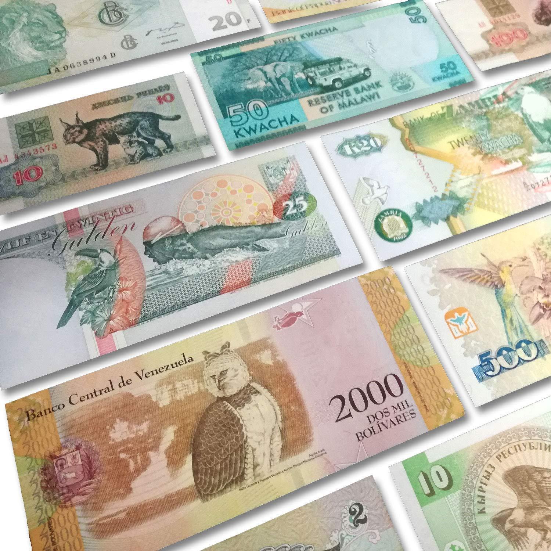 5 Billetes Tem/áticos de Animales Terrestres IMPACTO COLECCIONABLES Billetes del Mundo