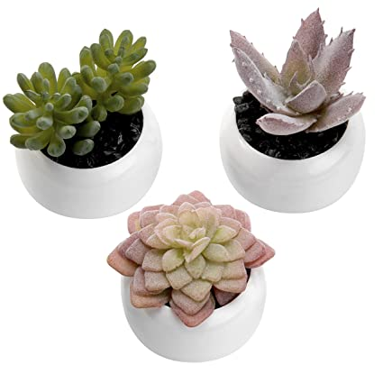 Image result for small succulents