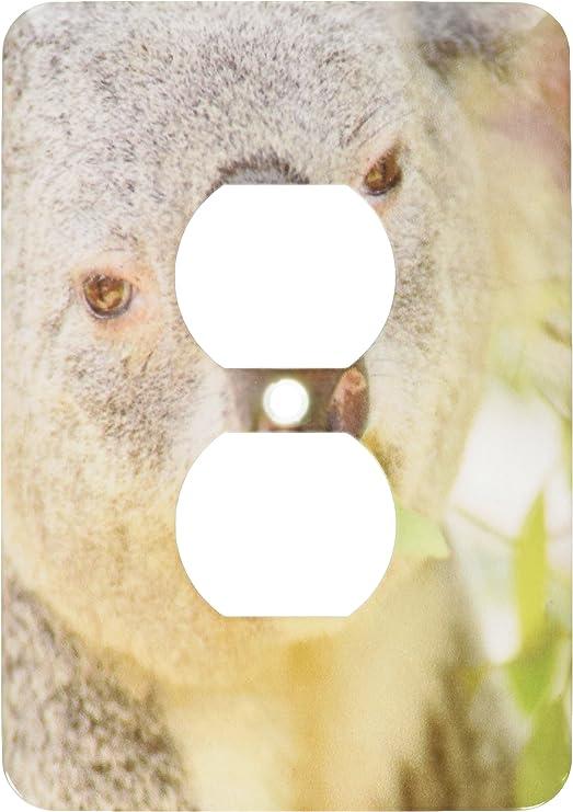 Eucalyptus Ca Us05 Mpr0030 Maresa Pryor 2 Plug Outlet Cover 3dRose lsp/_88544/_6 Queensland Koala Bear San Diego Zoo