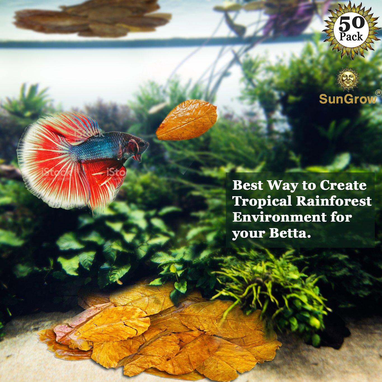Amazon.com: SunGrow 50 Mini Betta Leaves - Create Betta Natural ...