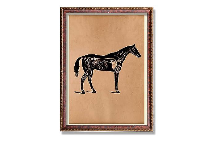 Amazon Horse Heart Print Animal Anatomy Poster Medical Decor