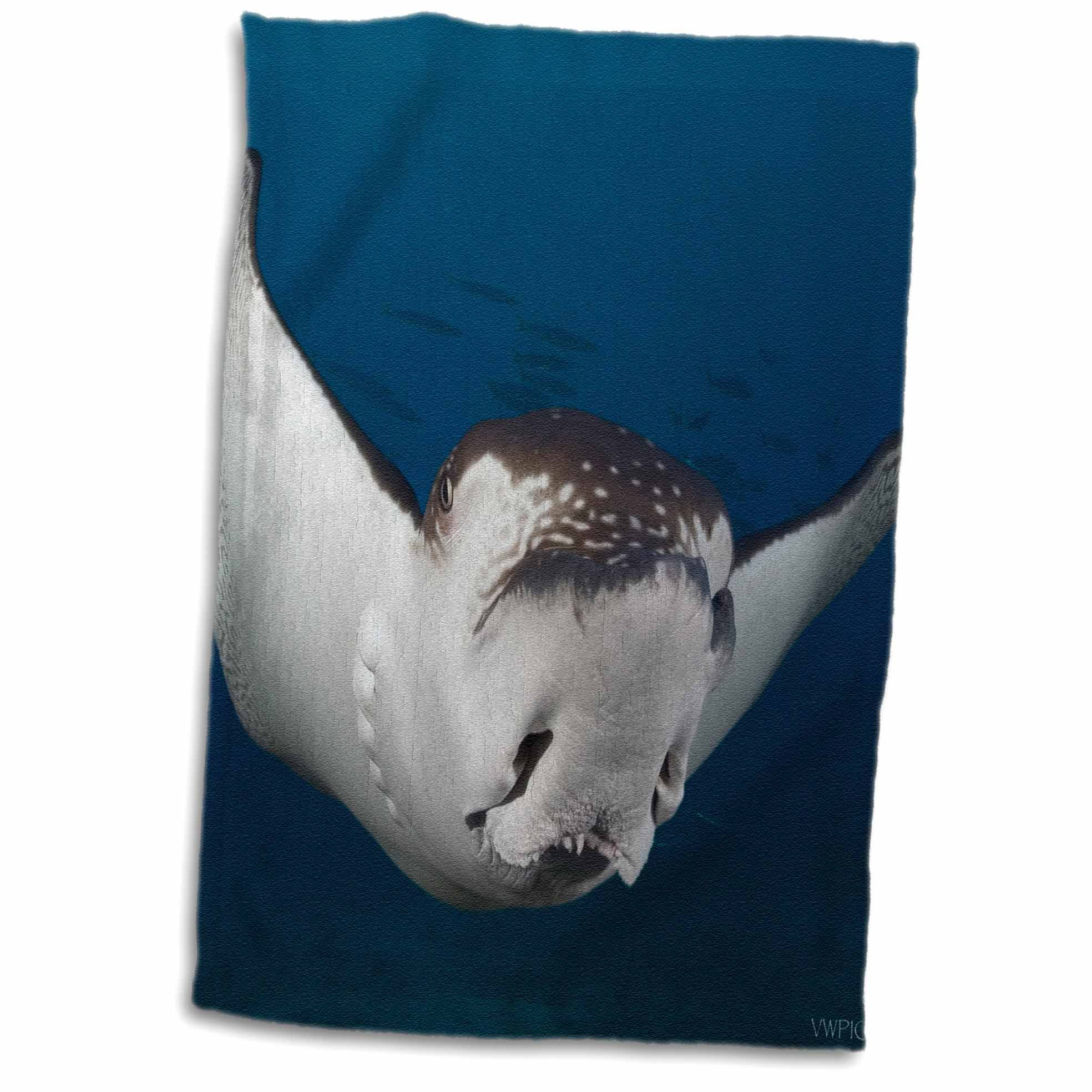 3dRose Spotted Eagle Rays,Aetobatis Narinari,Reach Over 6 Feet in Wingspan and are Related to Sharks.Hawaii Towel, 15'' x 22''