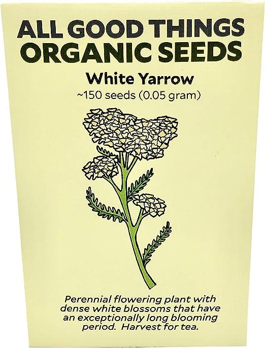 Todos los Good cosas orgánico Semillas blanco Yarrow semillas (~ 150): Amazon.es: Jardín