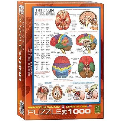 Eurographics cerveau puzzle (1000pièces)
