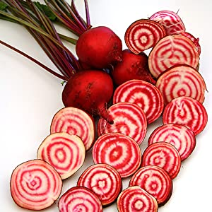 Chioggia Beet Seeds - 2 g ~100 Seeds - Heirloom, Open Pollinated, Non-GMO, Farm & Vegetable Gardening Seeds