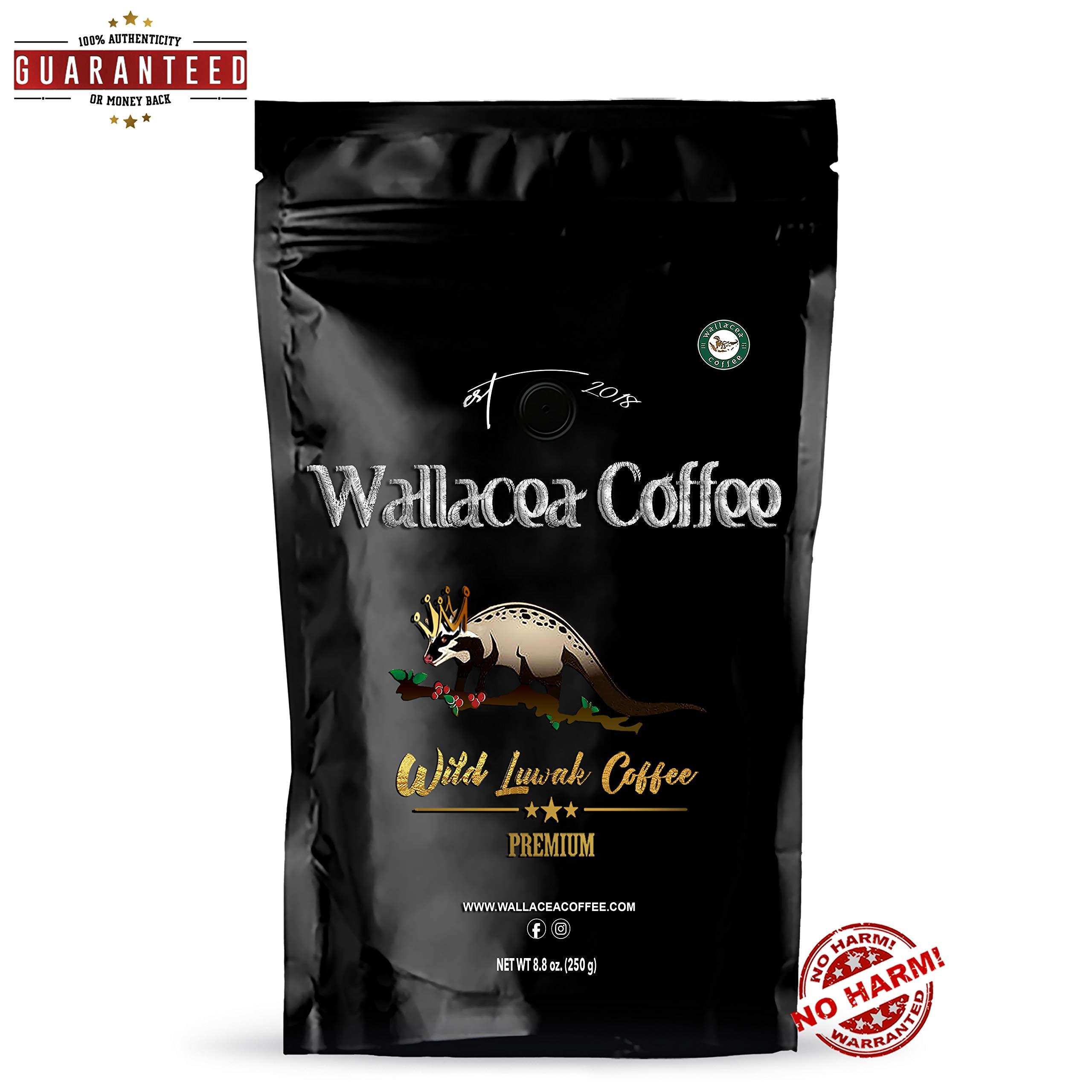 Wallacea Coffee Wild Kopi Luwak Coffee Beans, Gayo Sumatra Indonesia, 250 grams (8.8 oz) by Wallacea Coffee