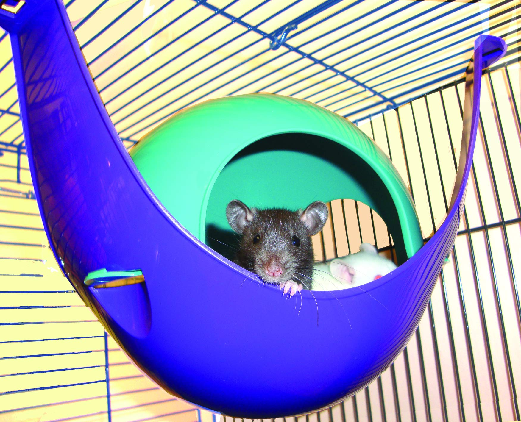 Lixit Critter Space Pod, Perfect for Small Animals 5