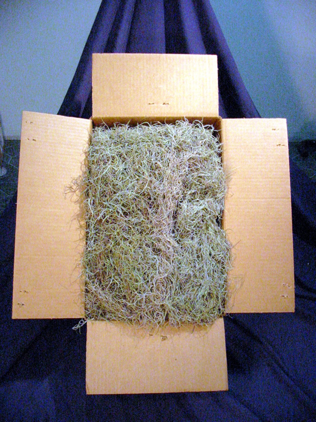 Fresh, Clean Spanish Moss Floral Decoration 28 lb Case