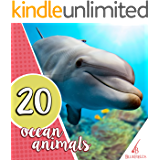 20 Ocean Animals (20 Numbers Series)