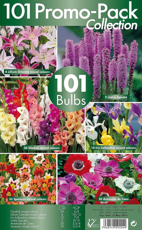 101 Promo Bulb Pack 6 Different Summer Flowering Varieties 101