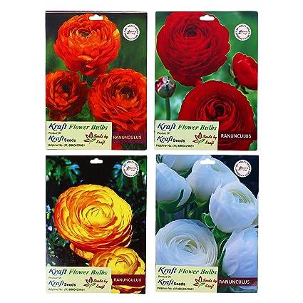 Ranunculus perennial flower bulbs mix by kraft seeds amazon ranunculus perennial flower bulbs mix by kraft seeds mightylinksfo
