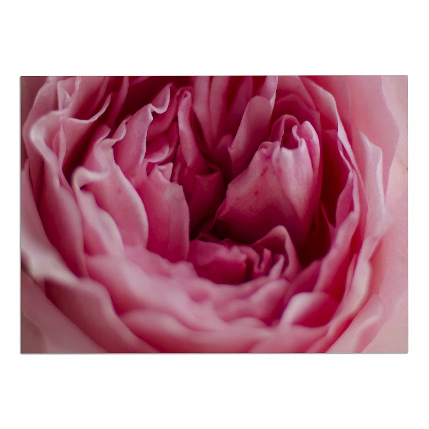 KESS InHouse Cristina Mitchell Row of pinks Pink bluee Floral Photography Dog Place Mat, 24  x 15
