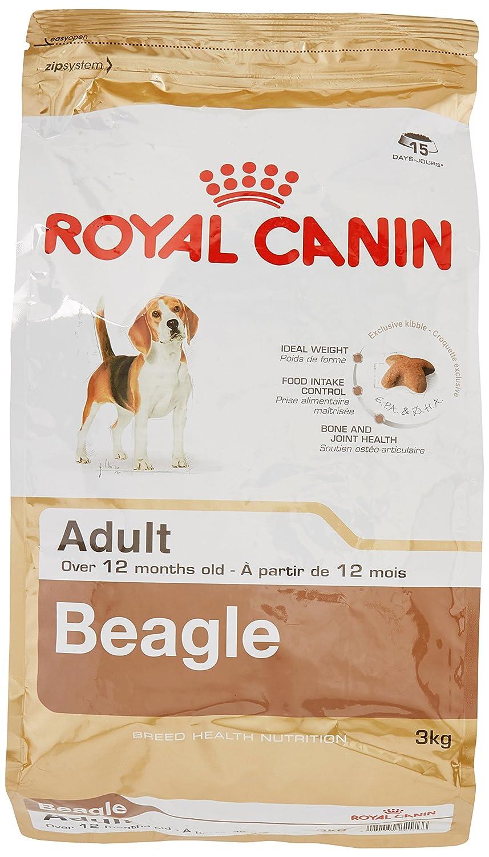 ROYAL CANIN Comida para perros Beagle Adult 3 Kg: Amazon.es: Productos para mascotas
