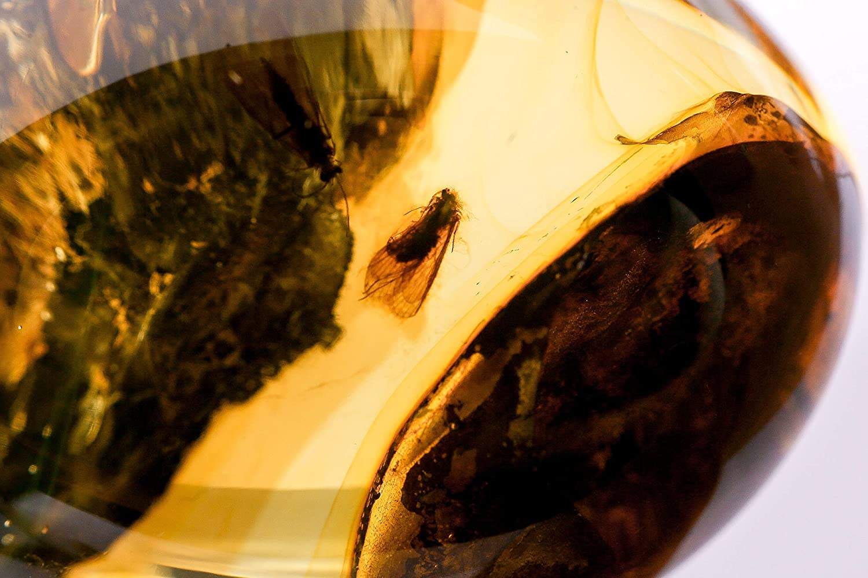 Piedra de ámbar báltico 100% natural con insectos
