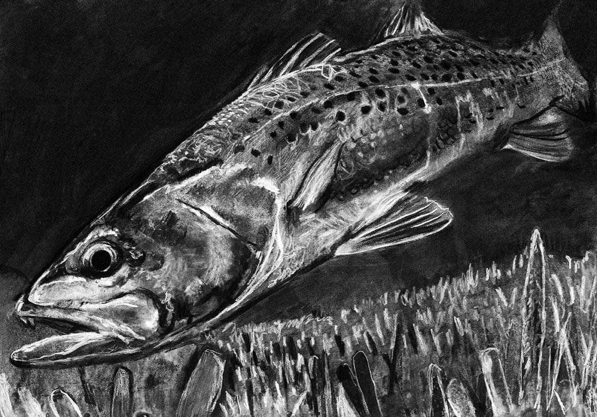 Spotted Sea Trout Wall Art Print, Hand Signed Fishing Gift by Jack Tarpon. Charcoal Speckled Trout Fishing Decor, Trout Fishing Artwork Choice Of Sizes 8x10, 11x14, 12x16.