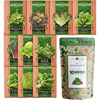 10 Heirloom Lettuce and Leafy Greens Seeds - 1500 Seeds - Non GMO Seeds for Planting - Kale, Spinach, Butter, Oak…
