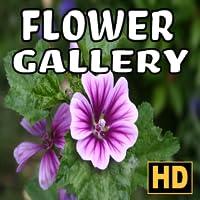 Galería de flores - Relajación en HD
