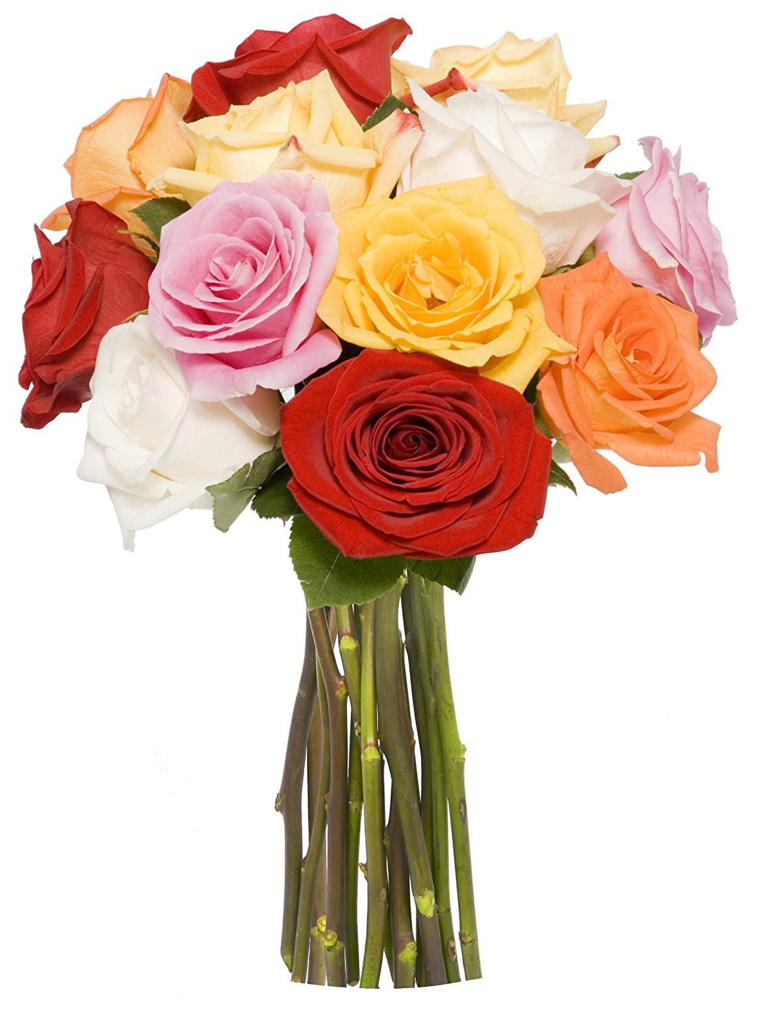 Amazon benchmark bouquets dozen rainbow roses no vase fresh amazon benchmark bouquets dozen rainbow roses no vase fresh cut format rose flowers grocery gourmet food izmirmasajfo
