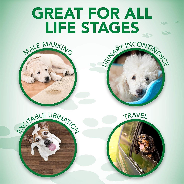 Vets Best - Pañales desechables para perro con indicador de humedad, ajuste confortable, talla M, paquete de 12: Amazon.es: Productos para mascotas