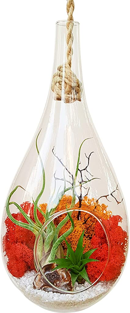 Amazon Com Bliss Gardens Teardrop Air Plant Terrarium Kit With Geode Half 2 Air Plants Tillandsia Large Hanging 13 Glass Sunburst On Ice Garden Outdoor