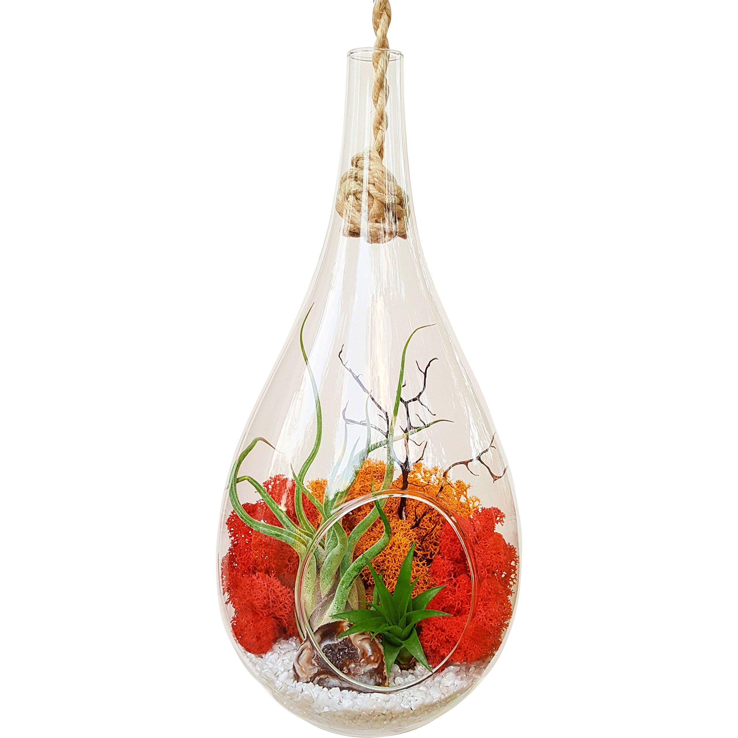 Bliss Gardens Teardrop Air Plant Terrarium Kit with Geode Half, 2 Air Plants Tillandsia / Large Hanging 13'' Glass / Sunburst On Ice