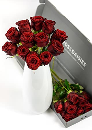 Beards Daisies Valentine S Day Flowers Delivered 12 Luxury Red