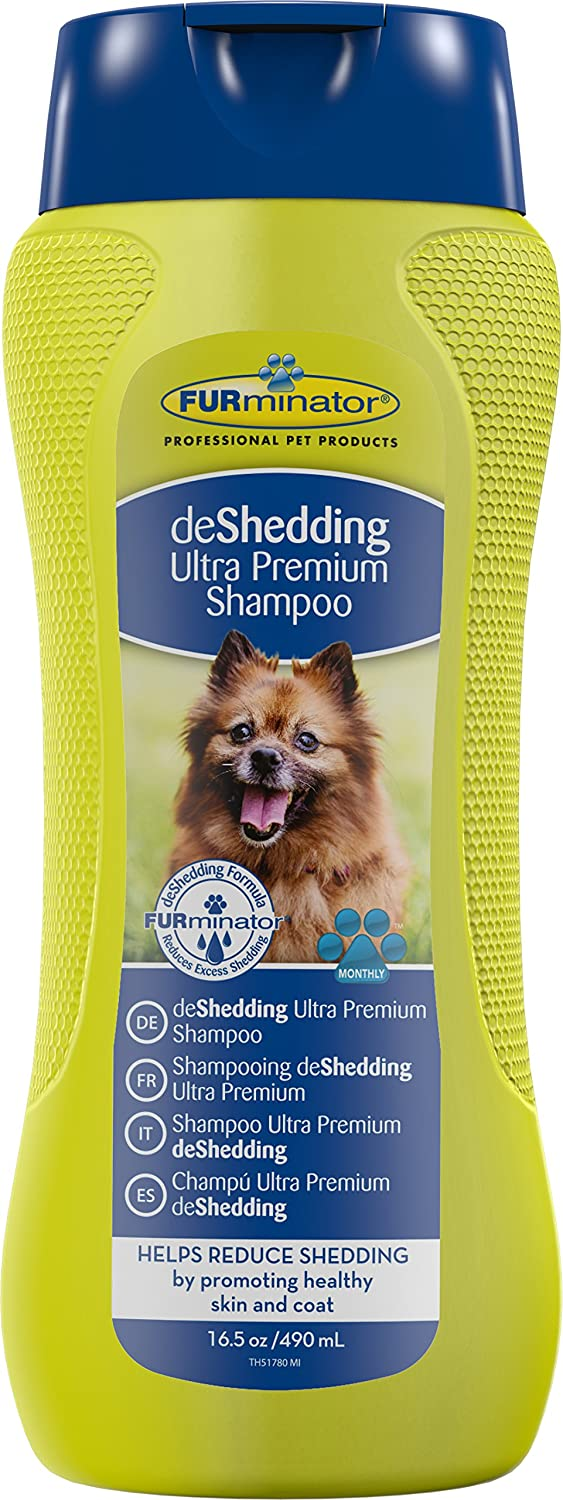 sheds brushed healthy stop and dogs after getting shedding beagle pomeranian to prevent the how dog