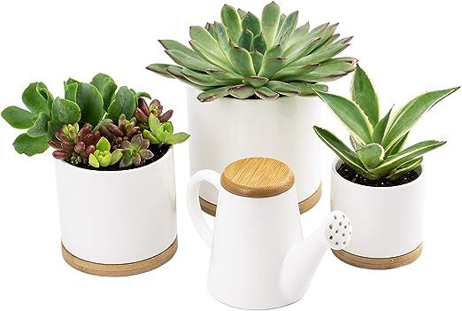 Macetas de cerámica de Oasis, 3 macetas pequeñas de color blanco ...