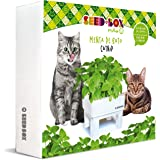 SeedBox SBMIMG Kit huerto Urbano de Menta, Blanco, 20x25x25 cm