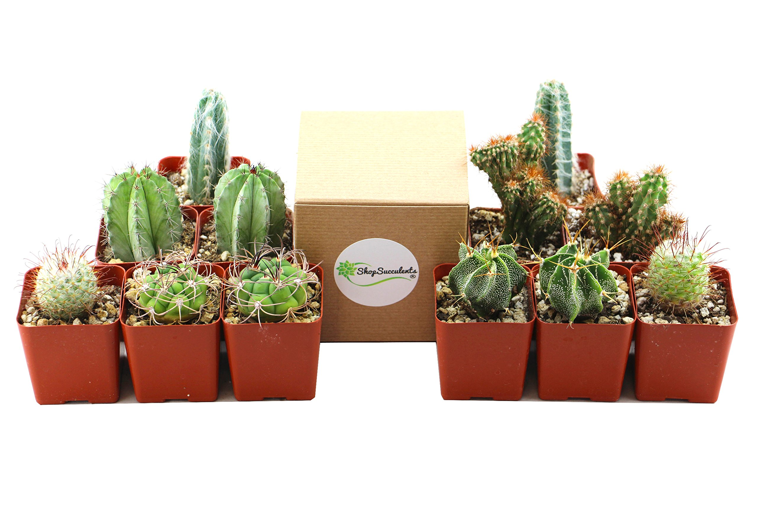 Shop Succulents | Cool Cactus of of Live Succulent Plants, Hand Selected Variety Pack of of Cacti in 2.5'' pots | Collection of 12