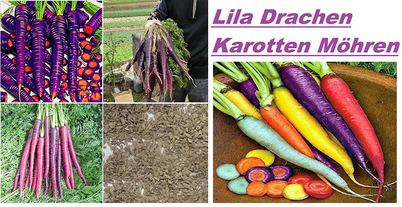 1500 Samen Karotte Violett Violett Gemüsegarten Gemüse Pflanzen