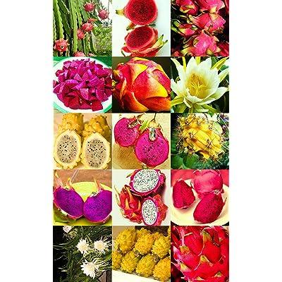 500 Seeds Pitaya Fruit Mix Edible Fruits hylocereus undatus Cacti Succulent Seed : Garden & Outdoor