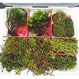 コスパ最強!天然苔8種類、ミズゴケ、小石付き!初心者も経験者 沢山入ってすぐに始められます コケリウム、テラリウムキット (天然採れたて 金曜締切⇒土日採取⇒月曜日発送)