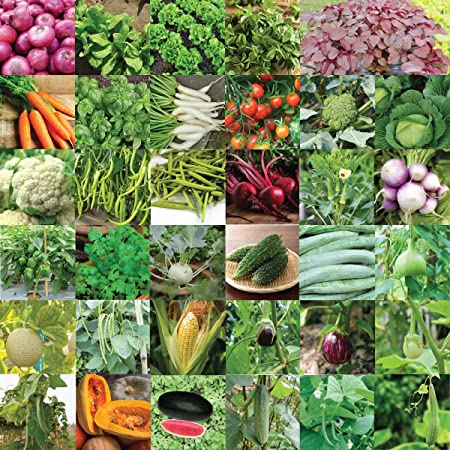 Pyramid Seeds Indian Vegetable Seeds Bank For Home Garden 35 Varieties 1675 Seeds Amazon In Garden Outdoors