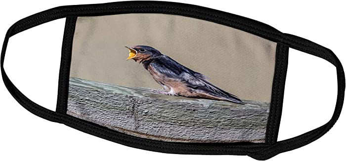 Top 4 Barn Swallow Food