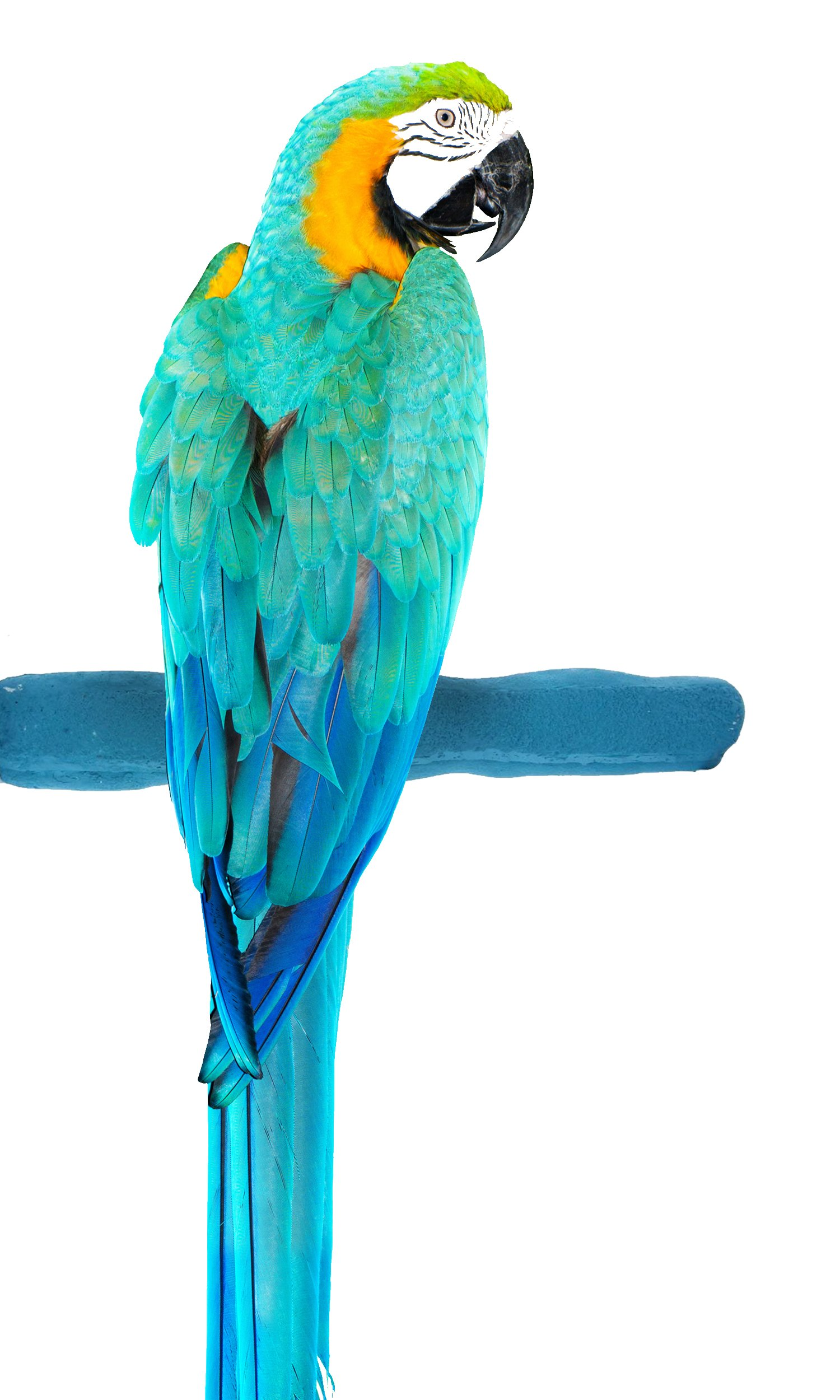 Sweet Feet and Beak Comfort Grip Safety Bird Pumice Perch - Patented Perch - Keeps Nails and Beak in Top Condition - Imitates Birds' Life in The Wild - Non-Toxic - Hangs Easily - Large - Blue by Sweet Feet and Beak